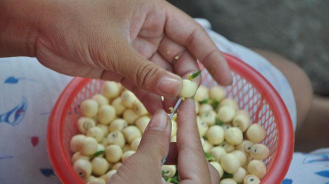cách nấu chè tổ yến hạt sen 6